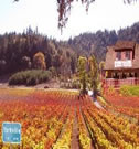 Anderson Valley Wine Tour